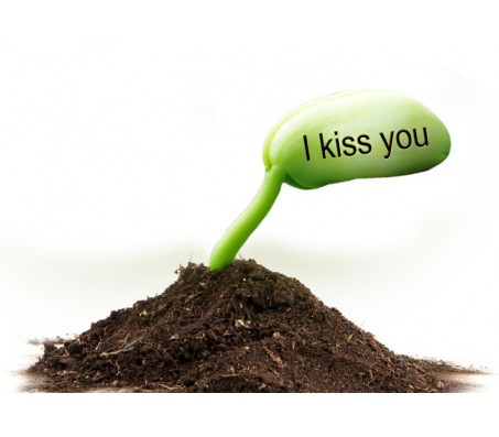 """2 Sets of """"I Kiss You"""" Message Seed"""